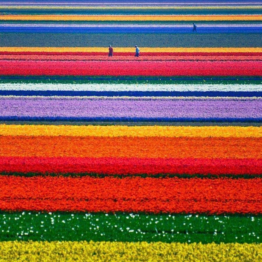 The-Tulip-Fields-in-Lisse-Netherlands 12 psychedelic looking places to visit