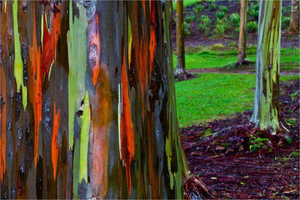 eucalyptus-stand-1030x687 12 psychedelic looking places to visit